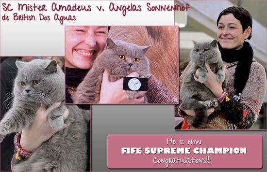 Amadeus Campeón Suupremo Fife