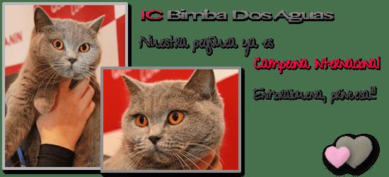 Bimba Campeona Internacional