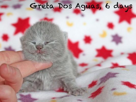 greta_03