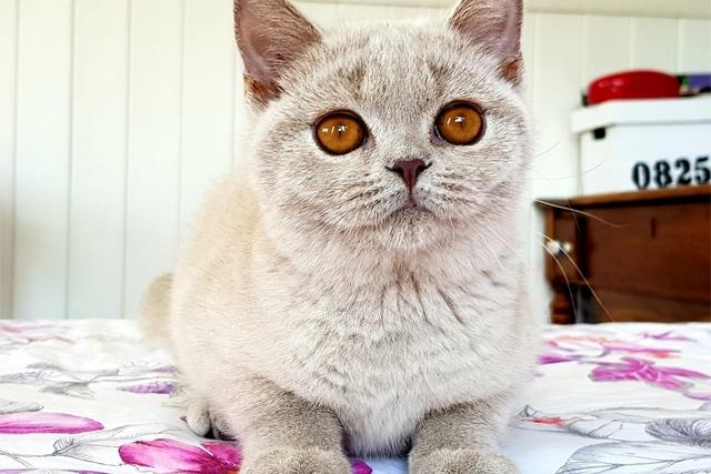 Liva Cats Freya